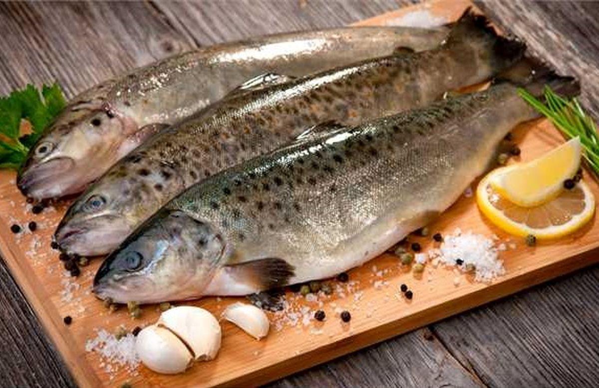 قیمت ماهی قزلآلا دوبرابر شد