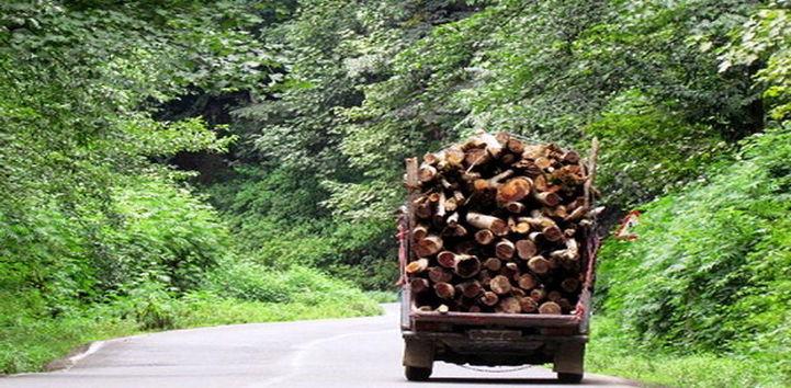 هم صنعت چوب، هم جنگل ممکن است؟