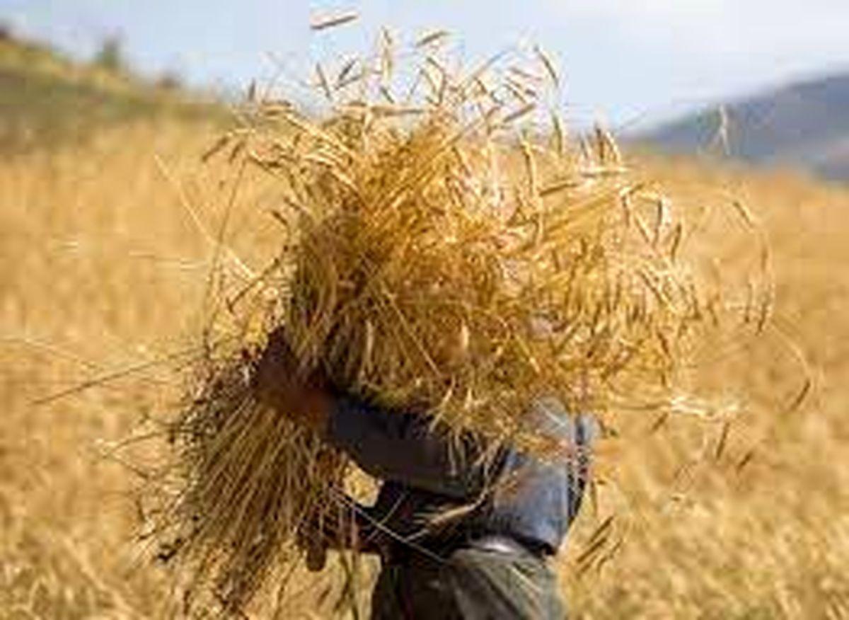 خرید ۴.۵ میلیون تن گندم از خارج کشور