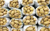 جایگزینی سیب زمینیهای مازاد به عنوان خوراک دام